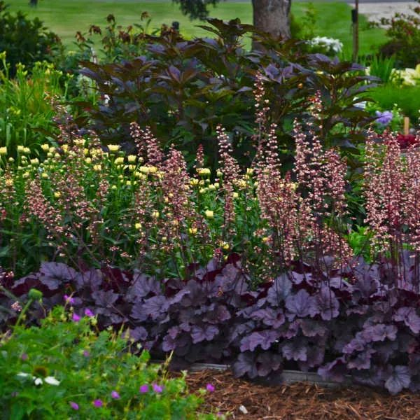 A Guide To An Aesthetically Pleasing Flower Bed